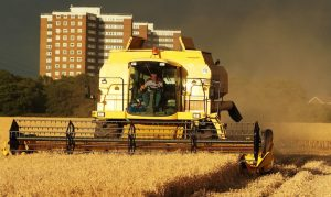 Chadwell Harvest
