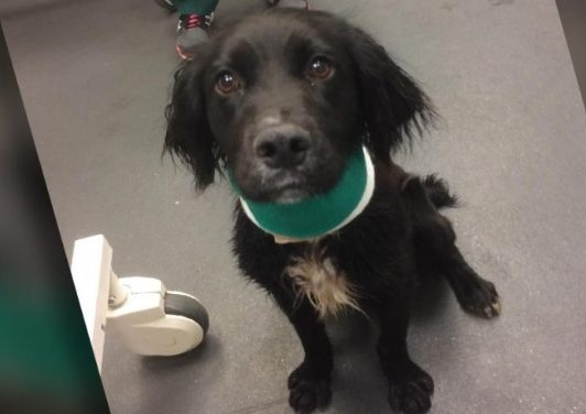 """Puppy found in Grays with """"worst wound ever seen"""" by RSPCA"""