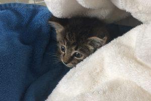 Kittens Grays 2