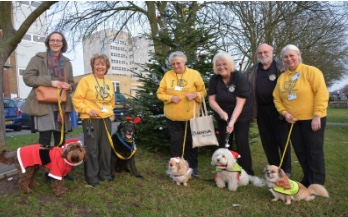 Happy tales from dogs rescued from South Ockendon puppy farm