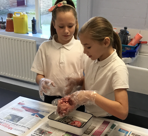 Ormiston Park Academy's science team visit Aveley Primary