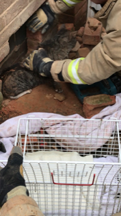 Cat rescued after being stuck in a wall in Grays