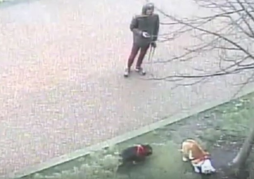 Do you recognise this dog walker in Purfleet?