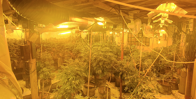 Cannabis factory found in Grays