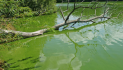 Warm weather conditions spark vet warning about deadly blue-green algae in water bodies