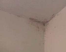 Thurrock councillors call for a report on mouldy homes