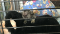 Infant marmoset rescued by RSPCA in Grays