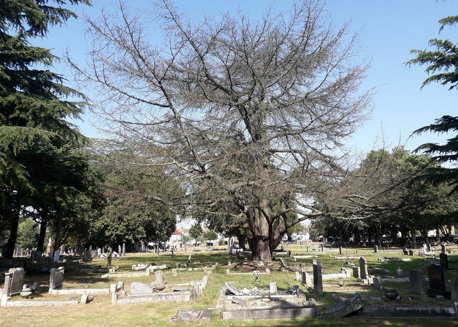 Tree fellers take action at Grays cemetery