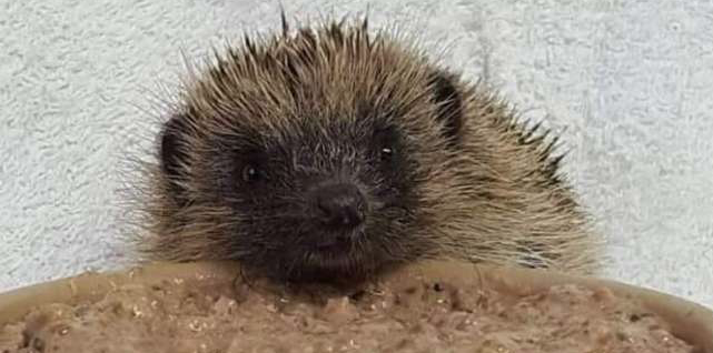 Another prickly problem prompts appeal by Wildlife Hospital
