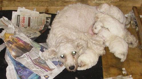Thurrock Council set to agree an animal welfare plan