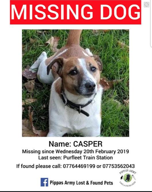 Appeal after dog goes missing in Purfleet