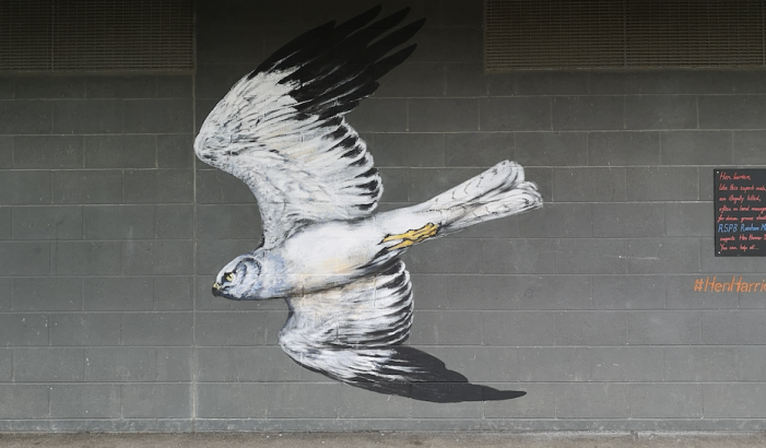 Spectacular street art unveiled at local RSPB site to mark Hen Harrier Day